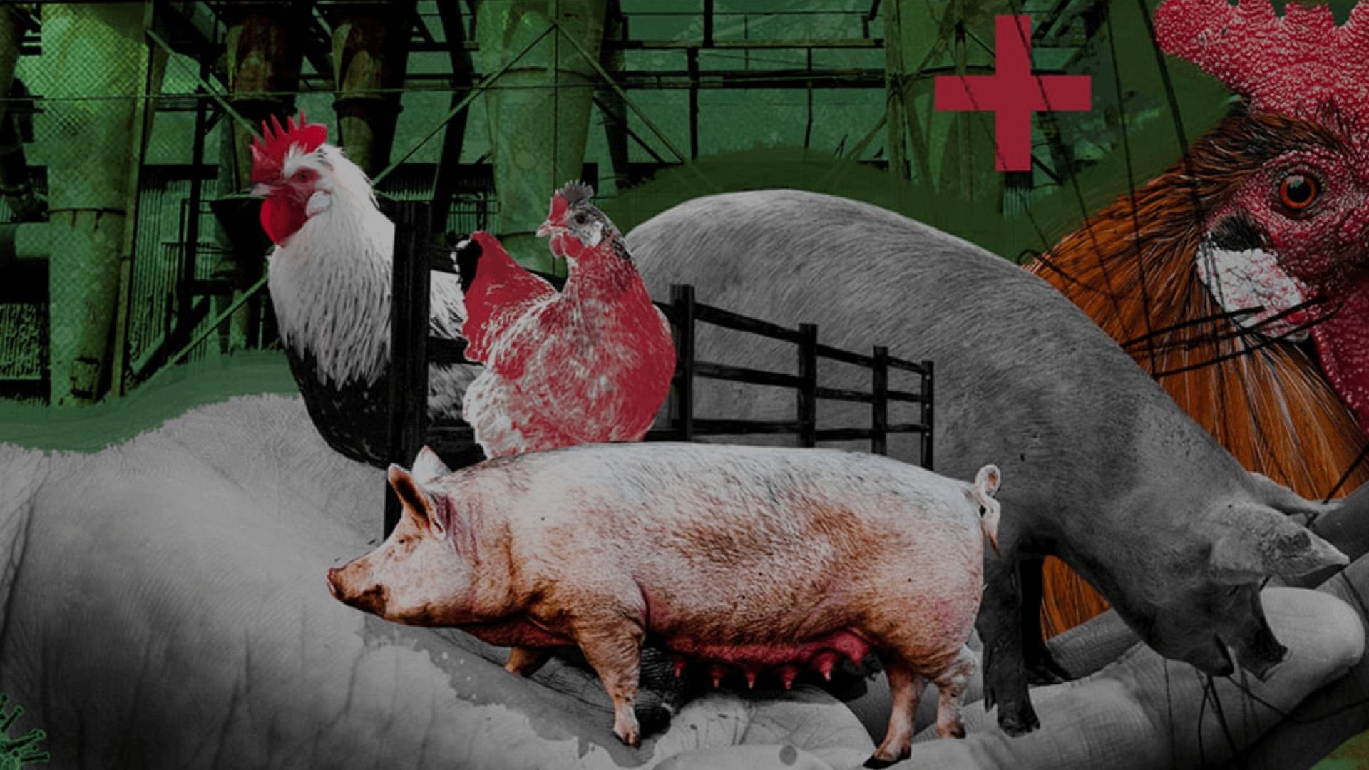 Tra scienza, agricoltura e politica: le false credenze su Covid-19